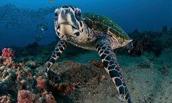 Turtle, Mozambique