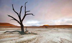 Tree standing alone in the desert