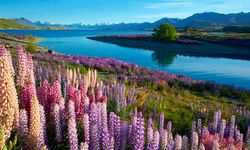 Flowers and lake