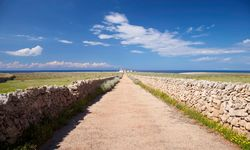 A Road Bordered by Stone Walls in Summer