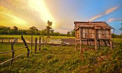 Farm in the Cambodian Countryside