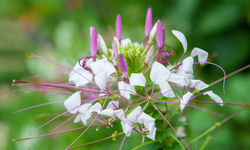Belize Wild Flowers