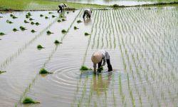 Paddyfield Workers