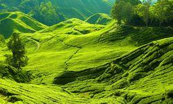 Verdant Hills - Malaysia