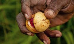 Nutmeg Grenada
