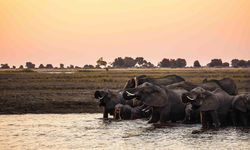 Elephants WAshing Okavango