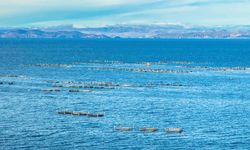 Blue view of fishing at Titicaca
