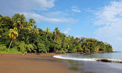 Palm trees and beach in Costa Rica