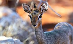 Wildlife of Samburu