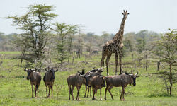 Selous Wildlife