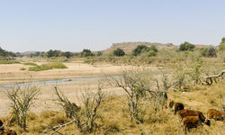 limpopo river with baobab trees and red sandstones