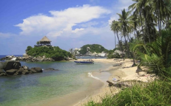 Beach and Palm Trees overhanging