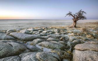 Tree in rocky terrain