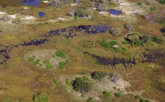 Wetlands of Botswana