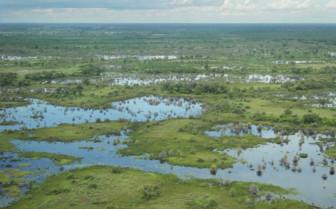 Wetlands aerial view