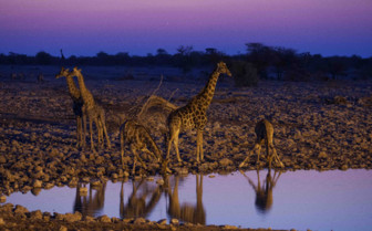 Sunset and wildlife in Namibia