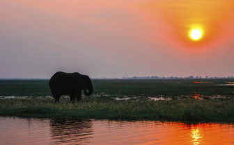 Elephant and sunset in Zambia