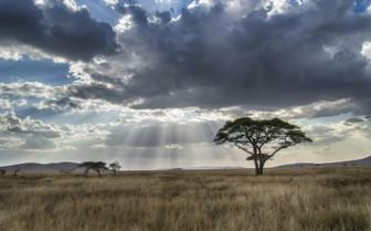 Tanzania Tree Serengeti