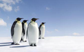 Penguin in Antarctica