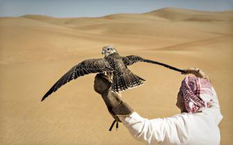 Falcon in the Desert, Dubai
