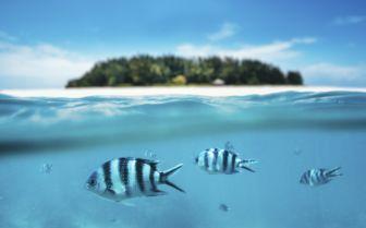 Split Shot of Fish off Pemba Island, Tanzania