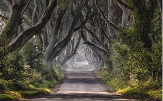 A view of the mystical Dark Hedges, Ireland