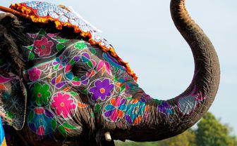Painted elephant in Jaipur