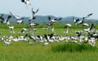 Bird life in Costa Rica