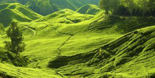 Green Hills, Malaysia
