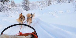 Husky Sled in Finnish Lapland