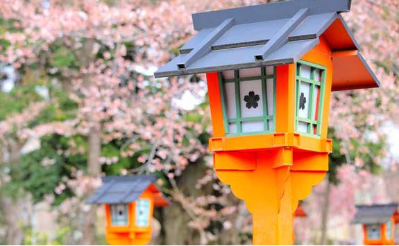 Kyoto Blossom