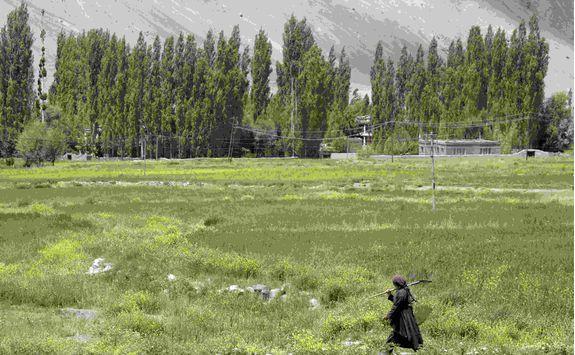 Ladakh fields