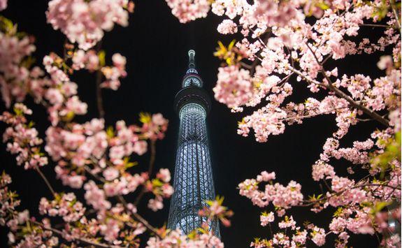 tokyo sakura skytree