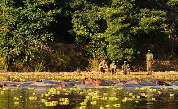 Walking safari at river