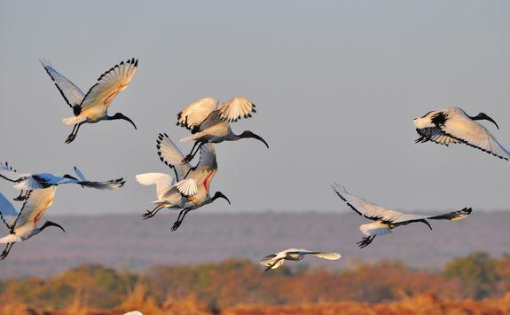 Block of birds flying