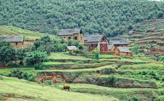 Madagascan countryside