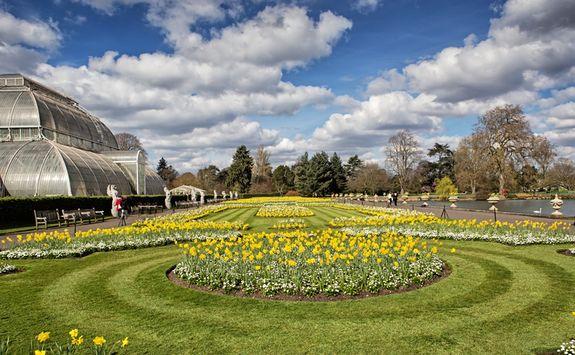 Flowers at Kew