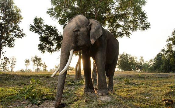 sunset elephant riding