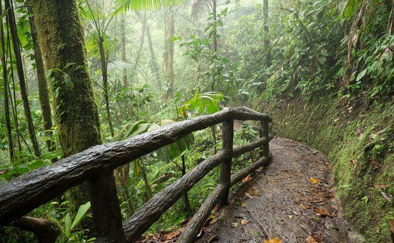 hiking along the rainforst canopy