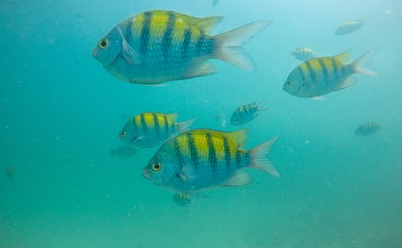 snorkelling with tropical fish costa rica