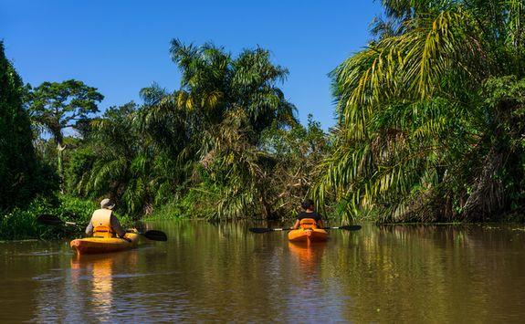 kayak in the rainforest