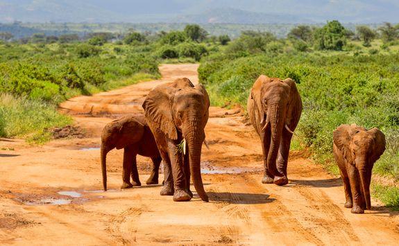 Elephants in the Masai Mara