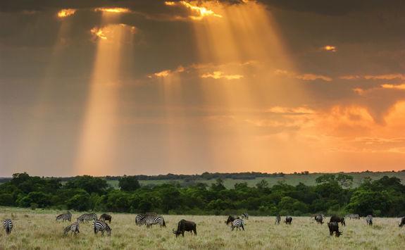 grazing wildlife