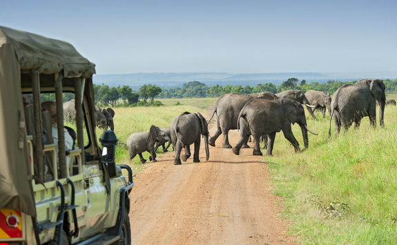 elephants game drive