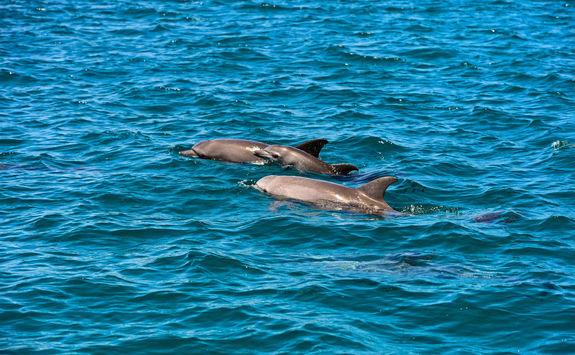 dolphins in kenya