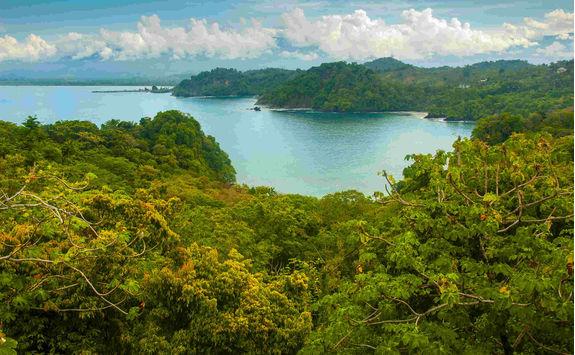 pacific coast tropical rainforest