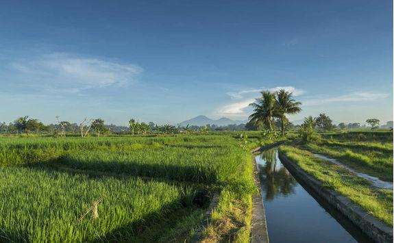 subak balinese irrigation system