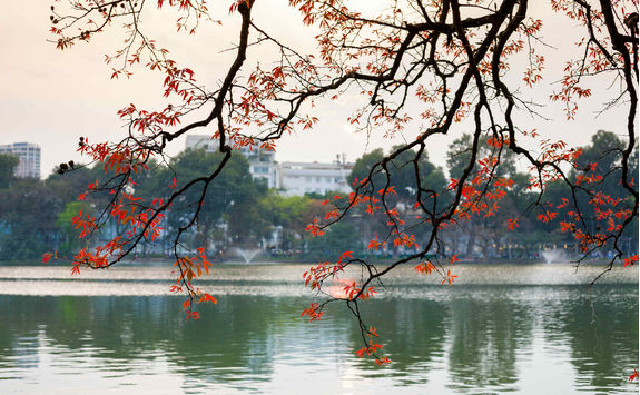 Tree in bud at Hoan Kiem lake in Hanoi