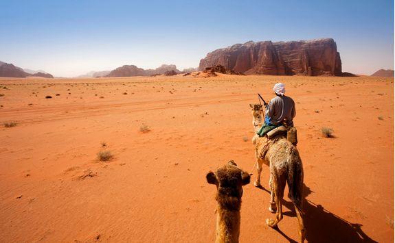 camel trek in the desert