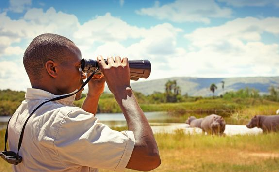 man with binoculars watching wild animals